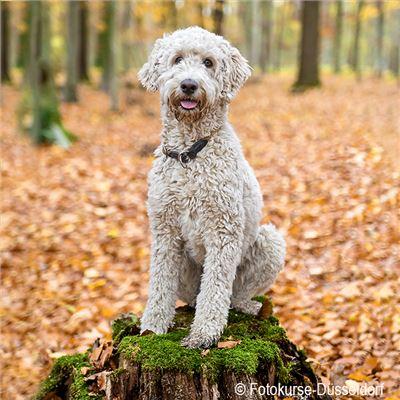 Hundefotografie Einzelkurs
