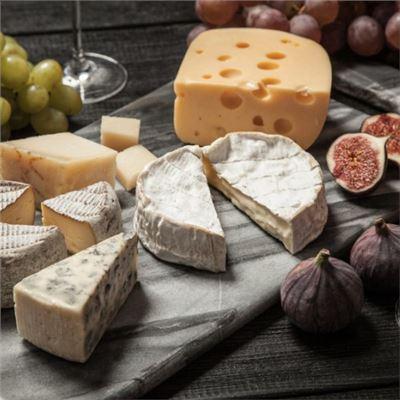Weinseminar - Wein und Käse - in Dresden